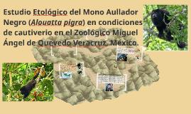 Copy of Estudio etológico del Mono Aullador Negro (Alouatta pigra) e