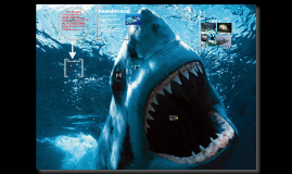 Gulf Coast Sharks