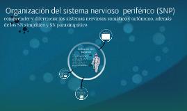 """Unidad 2 clase 3 """"Organización del sistema nervioso  periférico (SNP)"""""""
