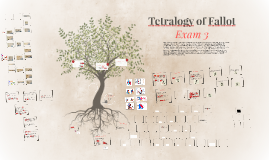 Tetralogy of Fallot (Exam 3)