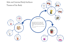 Skin and Internal Body Surfaces