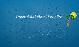 Tropical Rainforest Paradise!