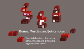 Bones, Muscles, and Joints notes