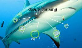 Copy of Shark Finning