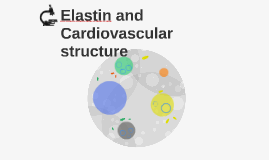 Elastin and Cardiovascular structure