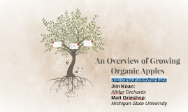 An Overview of Growing Organic Apples