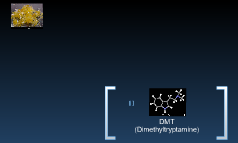 DMT (Dimethyltryptamine)