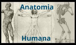 Copy of Anatomia