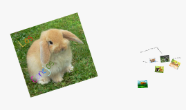 Los Conejos
