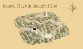 Bengal Tiger in Baghdad Zoo