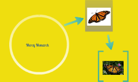 Mercy Monarch