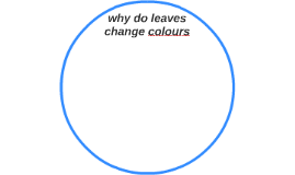 why do leaves change colours
