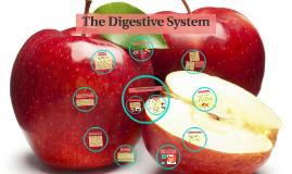 The Digestive System MVA