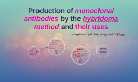 What are Monoclonal Antibodies?