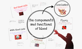 Copy of The Function of Blood