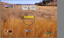 Copy of Grassland