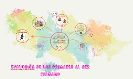 Copy of EVOLUCION DE LOS PRIMATES AL SER HUMANO