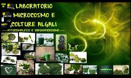 LABORATORIO MICROCOSMO E COLTURE ALGALI