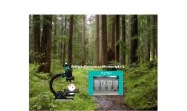 Estágio: Floresta ao Microscópio II