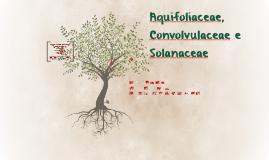 Copy of Solanaceae
