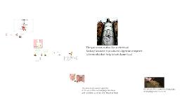 Copy of Digestive System Analogies