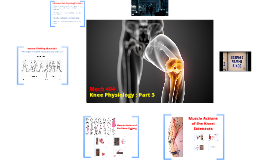 Knee Physiology 3