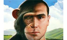 Affe Mensch