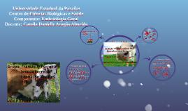 Avanços na Biotecnologia da reprodução dos bovinos