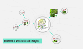 Alternation of Generations: Fern Life Cycle