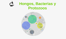 Copy of Hongos, Bacterias y Protozoos