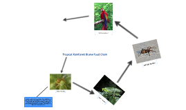 Copy of Tropical Rainforest Biome Food Chains by Razan Istelinides ...