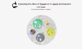 Exploring the effect of Tspan4 on X. laevis development