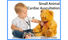 Small Animal Cardiac Auscultation