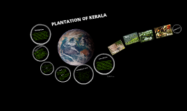 PLANTATION OF KERALA