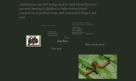 Copy of Copy of Matthew's Amazon Rain Forest - Leeches