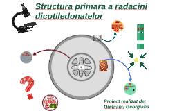 Structura primara a radacinii dicotiledonatelor