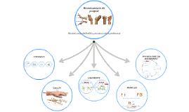 Biomécanique du poignet