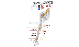 MACKINNON - 2016 CRN - Nerve Transfers for the Hand - Part 2 - Median Nerve