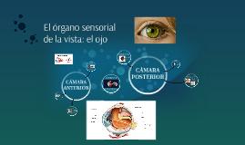 Anatomía y Fisiología del Ojo