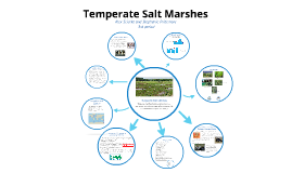 Temperate Salt Marshes