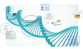 DNA Structure & Repliction