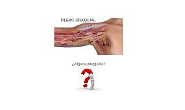 Elplexo braquiales una estructura nerviosa localizada en l