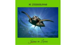 De zeeschildpad
