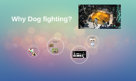 Why Dog fighting?