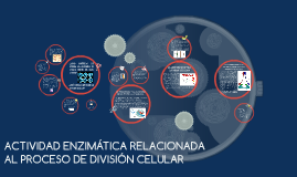 ACTIVIDAD ENZIMÁTICA RELACIONADA AL PROCESO DE DIVISIÓN CELULAR
