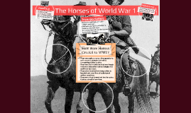 The Horses of World War 1