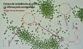 Genes de resistencia al azufre en Microcystis aeruginosa