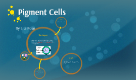 Lila's Pigment Cells