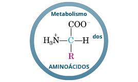 Copy of Copy of Copy of Metabolismo dos Aminoácidos