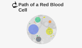 Path of a Red Blood Cell